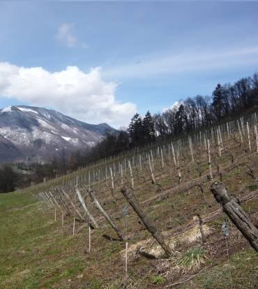 SAMEDI 16 NOVEMBRE 2019 – Domaine des Ardoisières – Vins de Savoie